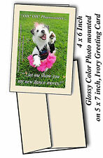 DANCE MOVES 10 greeting cards & envs, West Highland White Terrier Westie pet dog