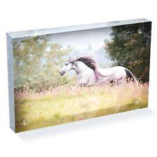 "Pure Spanish Horse Photo Block 6 x 4"" - Desk Art Office Gift #12473"