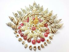 80 Mix Mini Natural Thai Seashells Craft Decorations Small Sea Shell