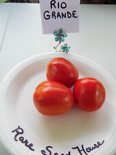 Rio Grande Tomato Seeds!  LARGE PLANTS WITH HIGH YIELDS! Comb. S/H