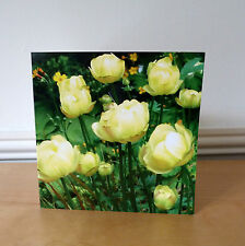Blank Greetings Cards Yellow Flowers Birthday All Occasions Notecard