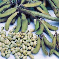 SOYA BEAN PLANT SEEDS GLYCINE MAX HARDY TOFU MEAT ALTERNATIVE BULK 200 SEED PACK