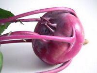 Kohlrabi- Purple Vienna- 200 Seeds -