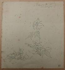 Dessin Ancien Étude de Fleurs LOUIS MAURICE BOUTET DE MONVEL c.1890 XIXe #5