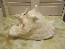 Vintage Conch Sea Shell Natural Unpolished Florida Shell Nautical Beach Decor #1