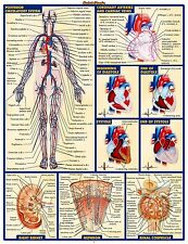 "Chart Human Body Anatomy Fabric poster 17"" x 13"" Decor 34"