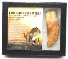 "CARCHARODONTOSAURUS Dinosaur Tooth 3.601"" Fossil African T-Rex MDB #15317 14o"