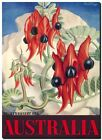 "Vintage Travel Poster CANVAS PRINT Australia Sturts Desert Pea Flower 8""X 10"""