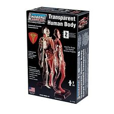 Lindberg Transparent Human Body Figure Anatomy Model Kit - 12-1/2 inches tall