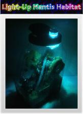 Light-Up Praying Mantis Clear Plastic Ventilated Habitat - Convenient Handle