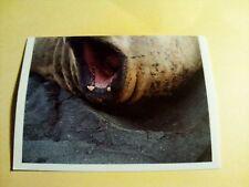Figurina/Sticker BILLA DER TIERISCHEN REKORDE n°59 see elefant new