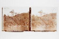 Cambogia Foresta Vergine Placca Lente Stereo Positivo 6x13cm Vintage