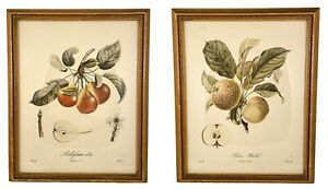Vintage Pair of French Botanical Stipple Engravings by Poiteau and Turpin Framed