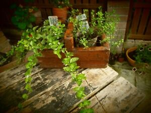 Vintage Rustic Old Wooden Handled Planter/Container - Two Compartments.