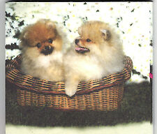 Pomeranian Puppy List Pads ..Two Pups in a basket...2  pads .. 100 sheets