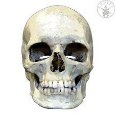 Totenkopf Maske 2D Gesichtsmaske Horror Halloween Theater Party