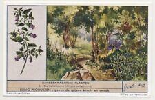 CARD IMAGE BELLADONE Atropa belladonna Deadly Nightshade PLANT Herbalism FLOWER
