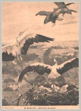 """Storch """"Gefärdetes Storchnest"""" Falken greifen an. Original Holzstich von 1899"""