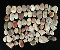 Natural Crazy Lace Agate 3187 Cts/65 Pcs Lot Magnificent Gemstones 21mm-59mm