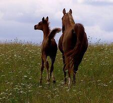 Kräutermischung für Pferde zur Unterstützung bei Rosseproblemen 25 Tage Kur