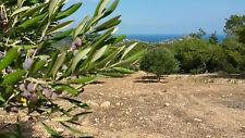 Grundstück auf Kreta - Natur pur
