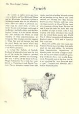 """The Norwich Terrier - Vintage Dog Art Print - Matted """"G"""""""