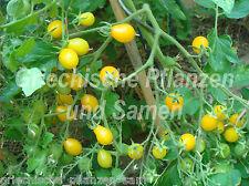 Dattelwein Tomate gelb * alte Sorte Tomaten * 10 Samen
