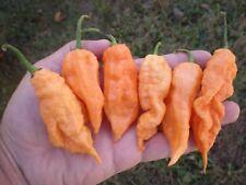 (20) JAY'S PEACH GHOST SCORPION  Hot Pepper Seeds