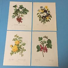 "P.J. REDOUTE Vintage Floral Prints Group Of Five 7.25"" X 9.75"" A6"