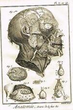 Diderot's Enclyclopedie - ANATOMIE, ARTERES DE LA FACE - c1750