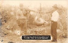 c.1910 RPPC Bringing Home the Bacon Deer Hunting Lower Rio Grande Valley TX