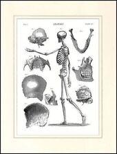 Illustration Art Engraving Art Prints