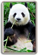 FRIDGE MAGNET - PANDA - Large -  Nature Wildlife