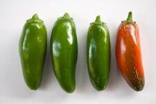 Jalapeno Mild Pepper 5+ seeds