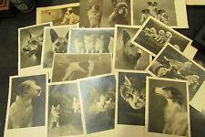 lot de 16 cpa animaux chats chiens divers cat dog 4