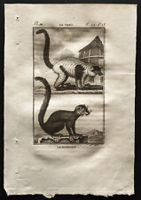 1799 - Buffon - Le vari, le mongous - Gravure zoologie