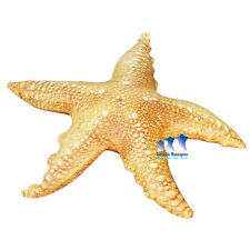 Starfish, Inflatable 20""