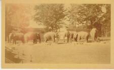 Circus Elephants- 3 1/2 X 5 3/4 Circus photo