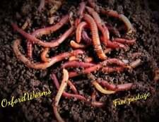 More details for composting worms live fresh dendrobaena dendra soil improvement wormery 100g