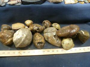 CSS: 13.10 lbs Of XL Old Stock Hog Creek Agate Rough Rock Washington Co, Id