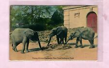 Elephants at the New York Zoo, Posted New Cannan, Conn, 1948   (113