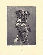 1890 Jean Bungartz Dog Art Head Study Print Reproduction PUG MOPS CARLIN CARLINO