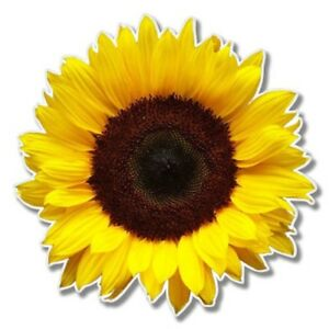 Sunflower Car Laptop Phone Vinyl Sticker  - SELECT SIZE