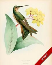 HUMMING BIRD PERCHED ON YELLOW FLOWER PLANT PAINTING AVIAN ART REAL CANVAS PRINT