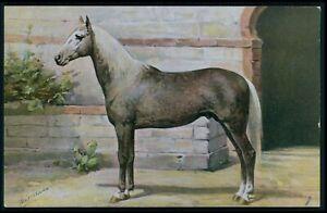 art Otto Eerelman Algeria arab Horse print original vintage old 1910s postcard
