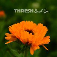 Calendula - Pacific Beauty - 250 Seeds + Free Gift