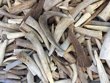 5 Pounds Of Deer and Elk Antler Tips-Great For Jewelry, Crafts, Grinding, Etc.