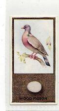 (Jg115-100) Phillips ,British Birds & Their Eggs, Wood-Pigeon ,1936, #41