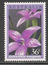 Australia #997 (A370) MNH - 1986 36c Elythranthera Emarginata Orchid