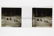 Chiens Photo Amateur Plaque de verre stereo ca 1920